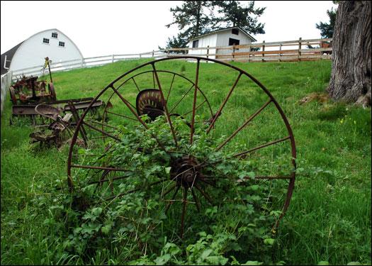 43006_wheelgrass.jpg