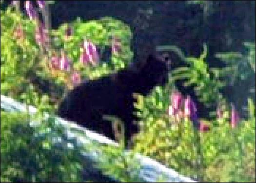 704_bear.jpg