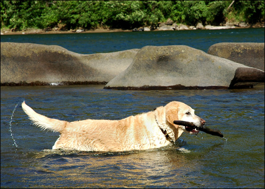 704_waterdog.jpg