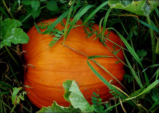 100906_pumpkin.jpg