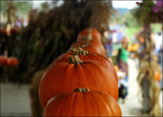 100906_pumpkinline.jpg