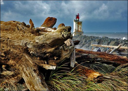 112606_driftwood2.jpg