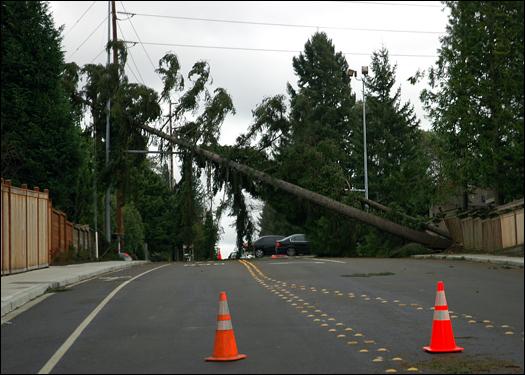 121506_treestreet.jpg