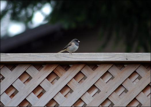 12207_bird.jpg