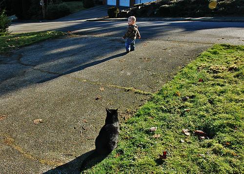 catwatchingboy.jpg