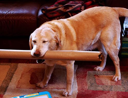 dogcardboard.jpg