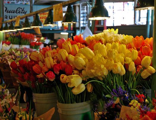50507_tulips5x.jpg