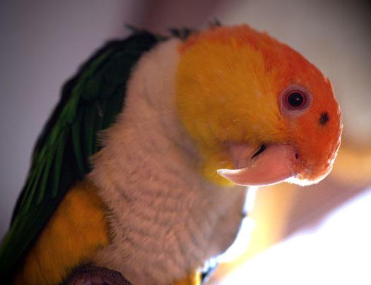 61707_bird1.jpg