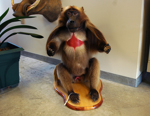 71407_monkey2.jpg