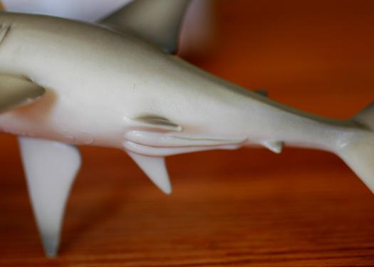 shark darmstadt zugenähte vagina