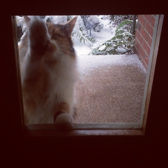 LET ME IN OH JESUS THIS SUCKS WHAT IS THIS WHITE STUFF I HATE EVERYTHING